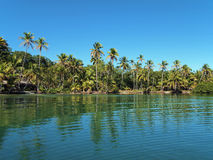 Tropical beach with coconut trees and calm water Stock Photos