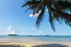 Tropical beach with coconut trees Stock Image