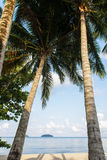Tropical beach with coconut trees Royalty Free Stock Image