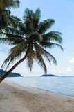 Tropical beach with coconut trees Stock Photo