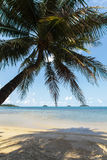 Tropical beach with coconut trees Royalty Free Stock Photography