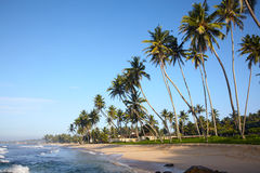 Tropical beach with coconut trees Royalty Free Stock Photo