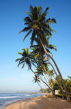Tropical beach with coconut trees Royalty Free Stock Images