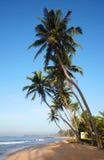 Tropical beach with coconut trees Stock Photos