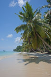 Tropical Beach. Coral sea at Silver Sands beach Royalty Free Stock Image