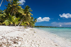 Tropical beach with corals in caribbean sea, Saona island, Dominican Republic Stock Photography