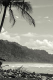 Tropical Beach - Costa Rica. Corcovado National Park - beach view, Osa Peninsula - Costa Rica Royalty Free Stock Photo