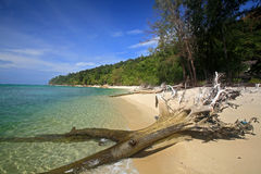 Tropical beach and crystal Andaman sea with wooden trunk Royalty Free Stock Photography
