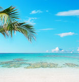 Tropical beach and crystal water Royalty Free Stock Photos