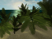 Tropical Beach at daytime, with Palm trees. Royalty Free Stock Images
