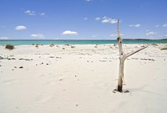 Tropical beach and dead tree Royalty Free Stock Photos