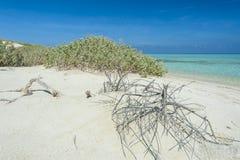 Tropical beach on a desert island Stock Images