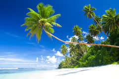 Tropical Beach Destination Ocean Coconut Concept Royalty Free Stock Photos