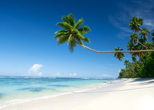 Tropical Beach Destination with Palm Tree. Stock Photo