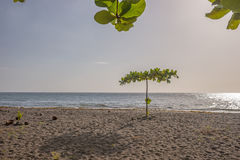 Tropical Beach in Dominica. Lonely tree on tropical beach of Dominica stock images