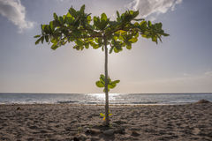 Tropical Beach in Dominica Stock Images