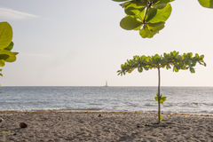 Tropical Beach in Dominica. Lonely tree on tropical beach of Dominica stock photo