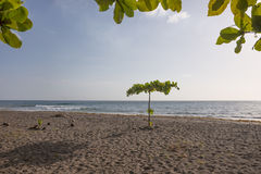 Tropical Beach in Dominica Stock Image