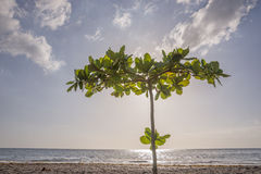 Tropical Beach in Dominica Royalty Free Stock Images