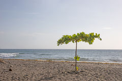 Tropical Beach in Dominica Royalty Free Stock Image