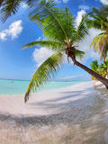 Tropical beach in Dominican republic. Stock Photography