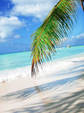 Tropical beach in Dominican republic. Stock Photos