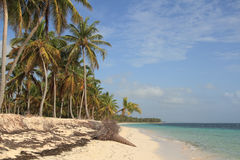 Tropical beach in Dominican Republic. Dominican Republic. Beautiful beach in Punta Cana Stock Image