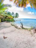 Tropical beach in Dominican republic. Caribbean sea Royalty Free Stock Photos
