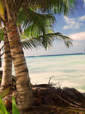 Tropical beach in Dominican republic. Caribbean sea Royalty Free Stock Photos