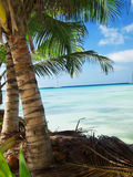Tropical beach in Dominican republic. Caribbean sea Stock Photo