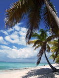 Tropical beach in Dominican republic. Caribbean sea Royalty Free Stock Photography