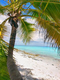 Tropical beach in Dominican republic. Caribbean sea. Stock Photo