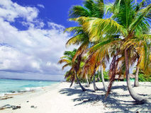 Tropical beach in Dominican republic. Caribbean sea Stock Image
