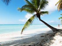 Tropical beach in Dominican republic. Caribbean sea. Royalty Free Stock Image