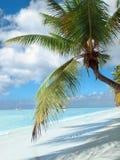 Tropical beach in Dominican republic. Caribbean sea. Stock Photos