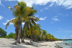 Tropical Beach, Dominican Republic. Royalty Free Stock Photo
