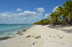 Tropical Beach, Dominican Republic. Royalty Free Stock Image