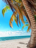 Tropical beach in Dominican republic. Saona Royalty Free Stock Images