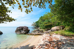 Tropical beach with dry leaves on the sand Stock Photo