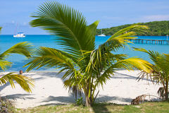 Tropical beach with exotic palm trees Royalty Free Stock Images