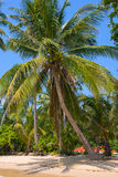 Tropical beach with exotic palm trees Stock Images