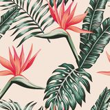 Bird of paradise leaves green color tropical seamless pattern. Tropical beach flowers bird of paradise leaves green color seamless pattern. Exotic vector royalty free illustration
