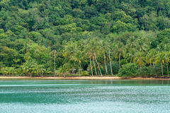 Tropical beach and forest Royalty Free Stock Photography