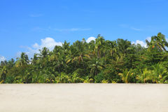 Tropical beach. Tropical forest on the Montelimar beach Stock Photography