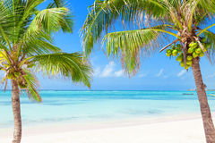 Tropical beach framed by coconut palms Stock Photography