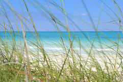 Tropical beach and grass. Green grass on the breeze of tropical beach, cayo coco, cuba Royalty Free Stock Photography