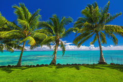 Tropical beach with grass and palm trees Royalty Free Stock Photo