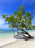 Tropical beach with a green tree on the sand Royalty Free Stock Photography