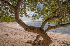 Tropical beach of Guadeloupe Stock Image