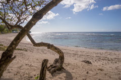 Tropical beach of Guadeloupe Royalty Free Stock Photos